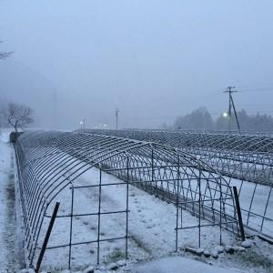 雪、降ってきました‼︎