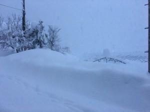 本日は雪の為、発送は中止させて頂きます。