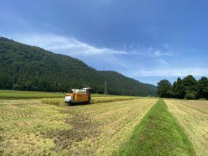 今年の稲刈りスタートです!!